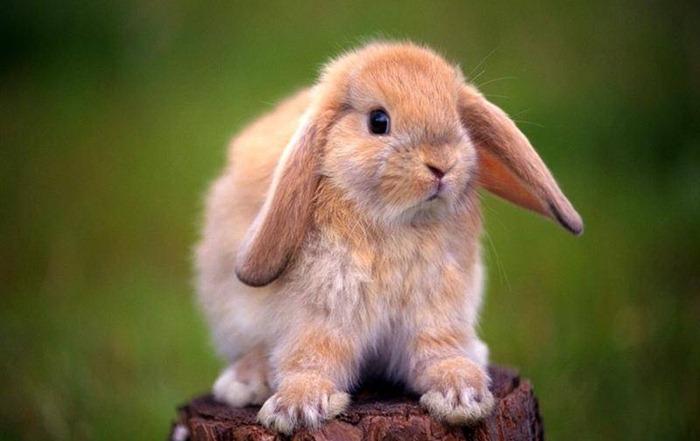 Все рейтинги : Топ-10 самых модных домашних животных