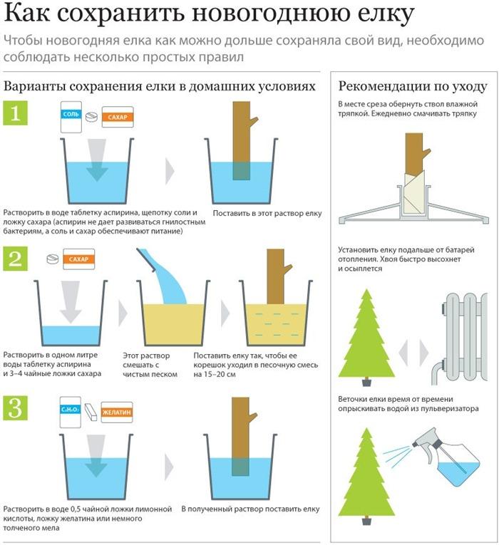 Как сохранить елку (Инфографика)