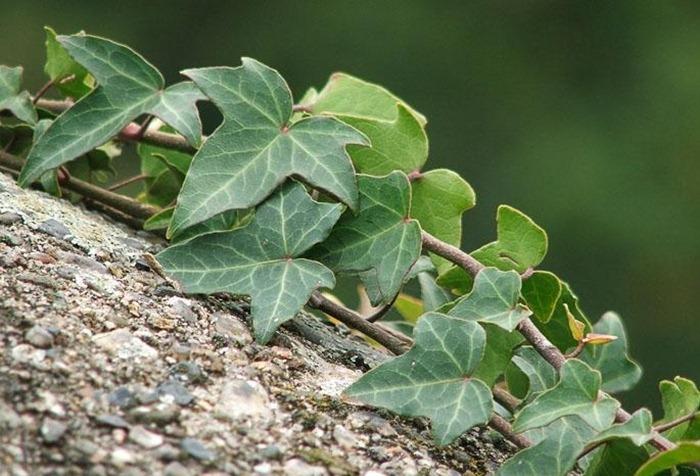 Все рейтинги : Самые полезные комнатные растения