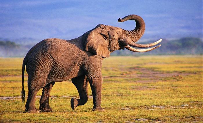 Самые долгоживущие существа планеты Земля (фото)