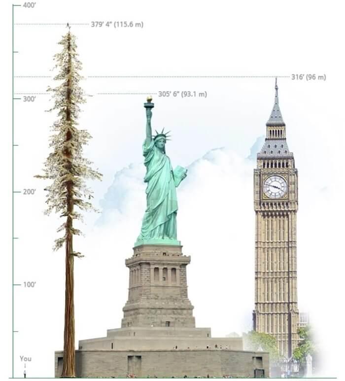 Сравнение высоты