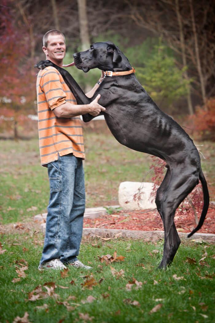Самый большие собаки