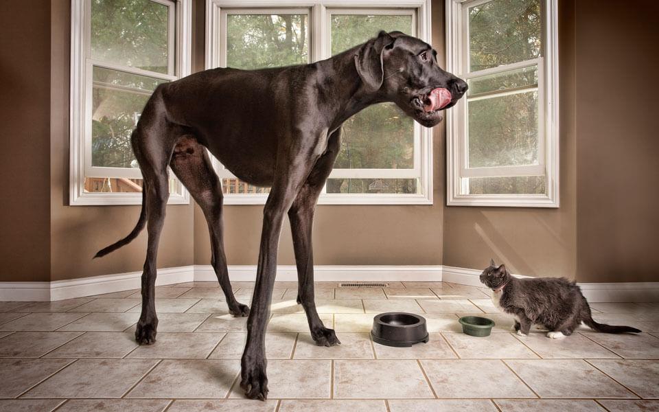 Большая лохматая собака порода