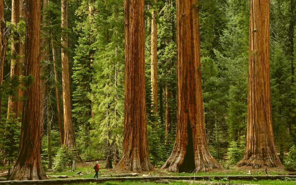 Какова высота деревьев и кустарников разных видов?
