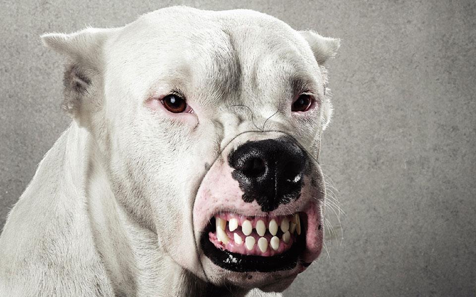 Картинки очень злой собаки
