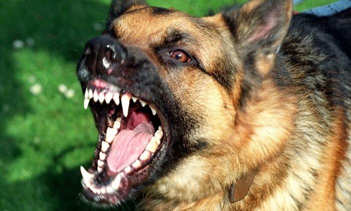 10 самых агрессивных пород собак  НОВОСТИ В ФОТОГРАФИЯХ