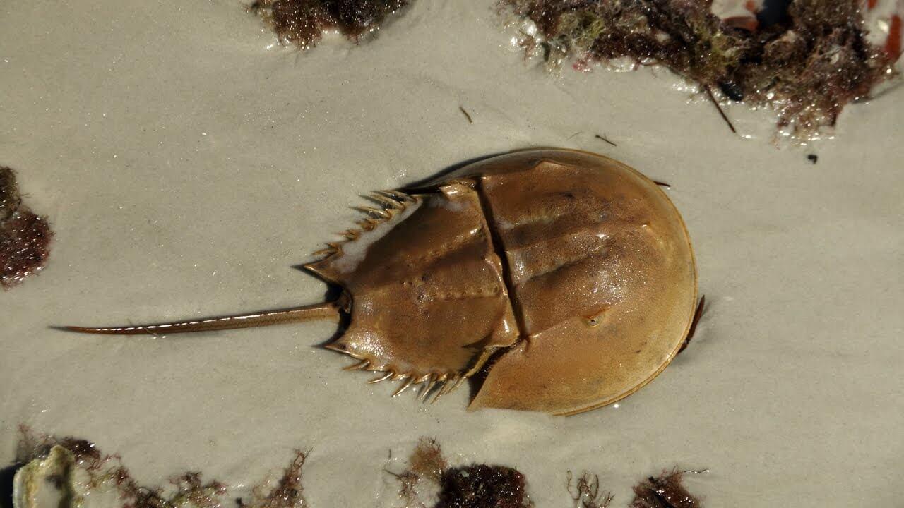 Самые древние рыбы на планете кто они