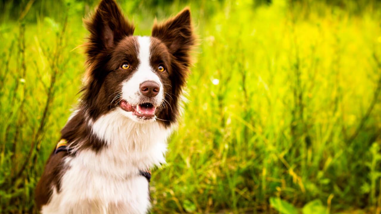 самые умные собаки с картинками интересуется, как