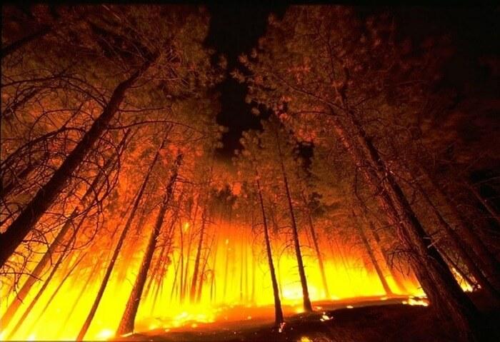 Лесной пожар Республика Бурятия