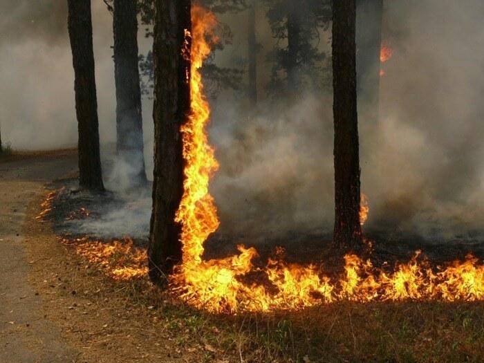 Воронежская область горит лес