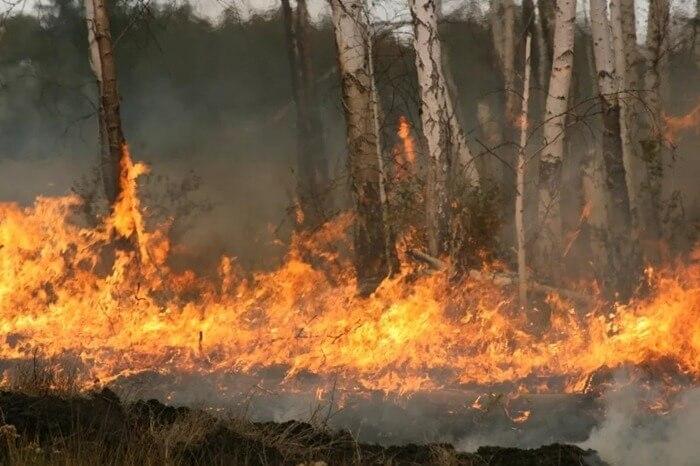 Курганская область в огне