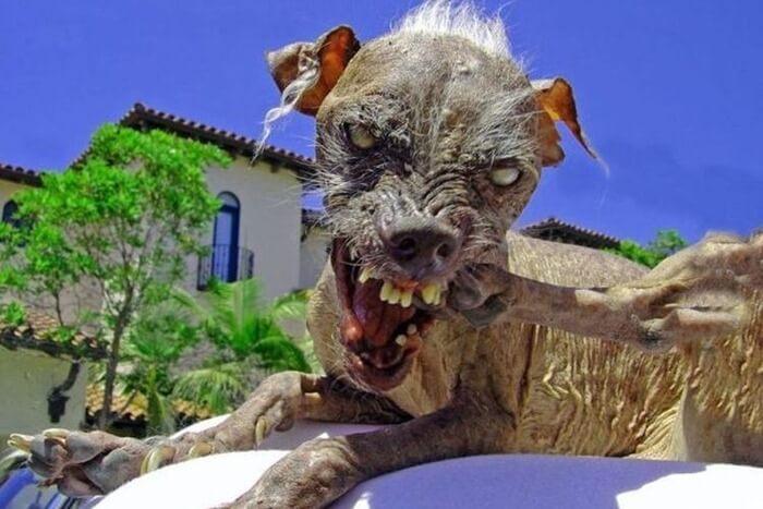 Самая страшная собака Сэм