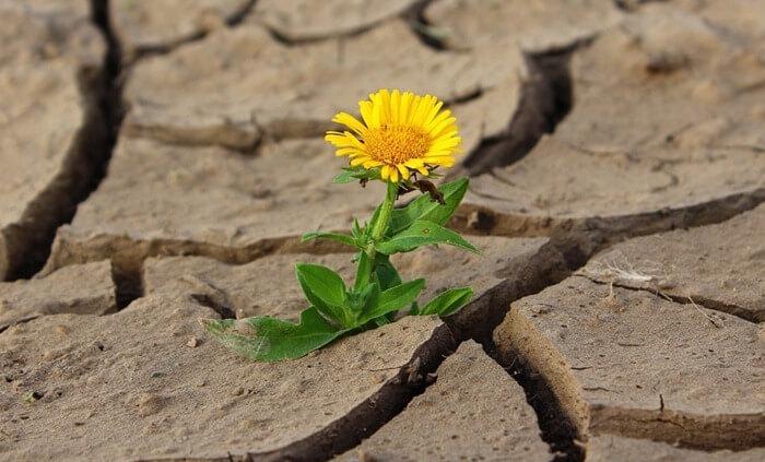 Растение в раскаленной почве