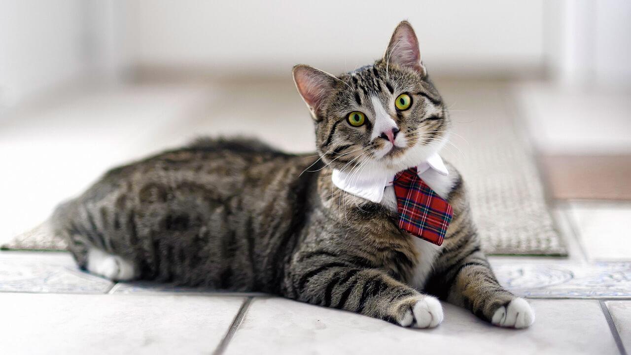 Самые популярные окрасы кошек рейтинг