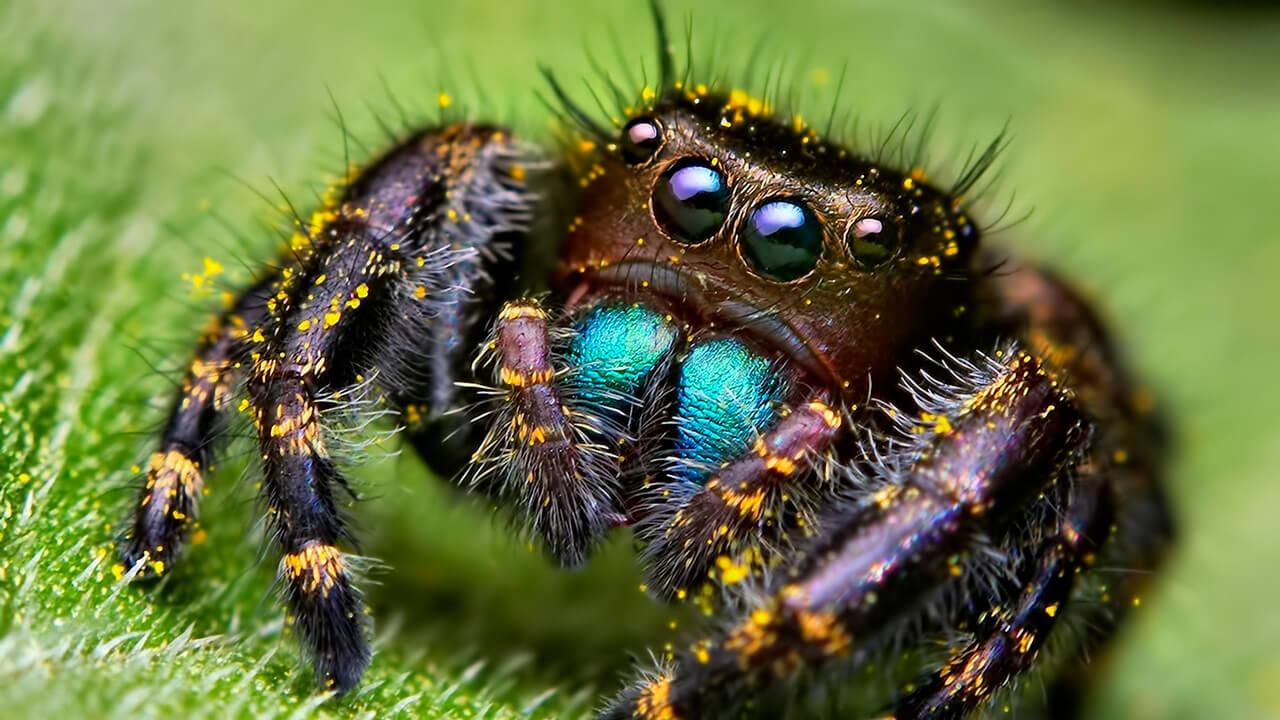 Пауки в Австралии – фото, названия и описание