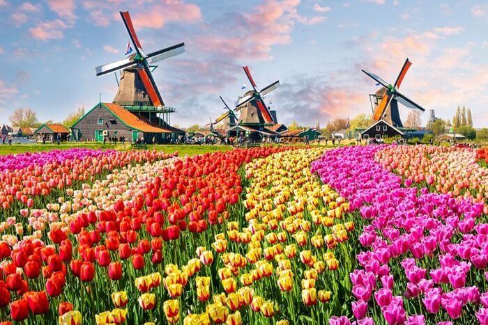 Амстердам3