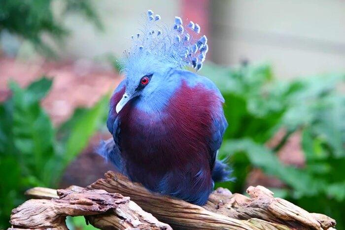 Самый красивый голубь