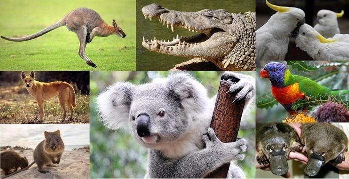 Животные живущие в Австралии