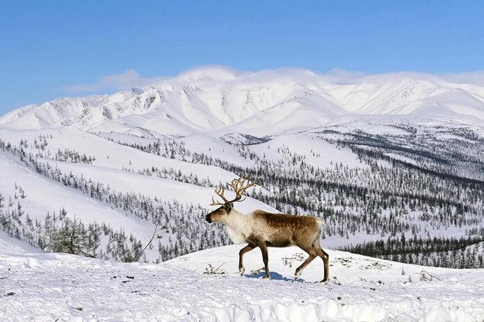 Путешествие на Крайний север на Новый год