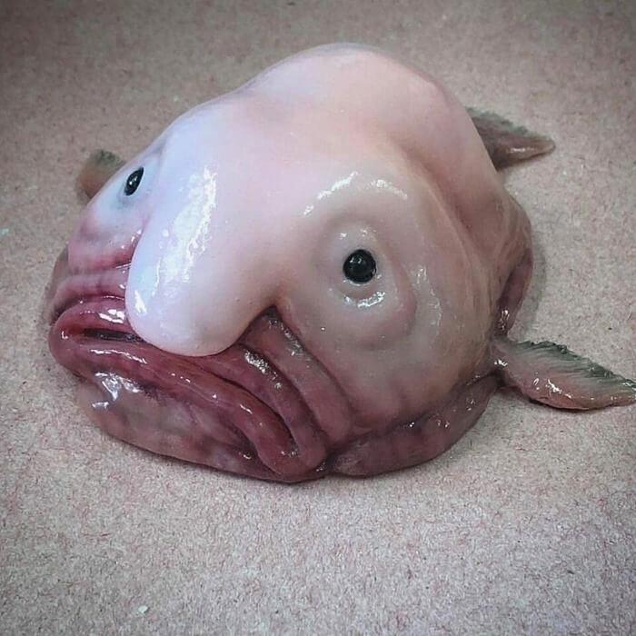 Забавная Рыба-капля