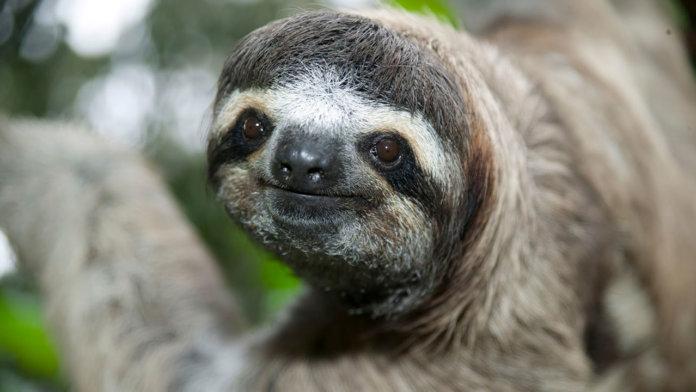 slothface