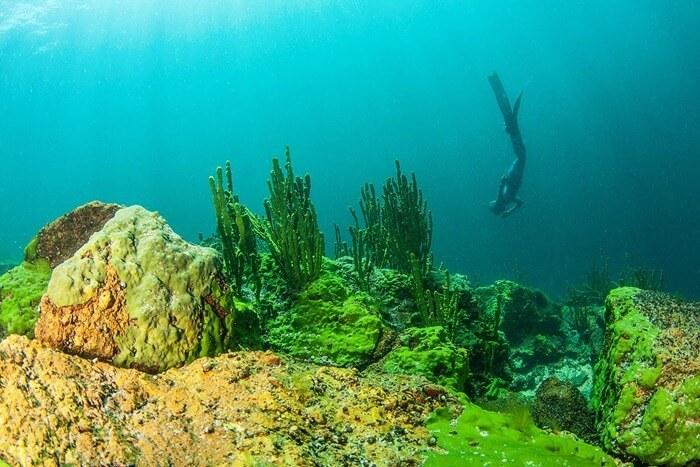 Интересный подводный мир Байкала