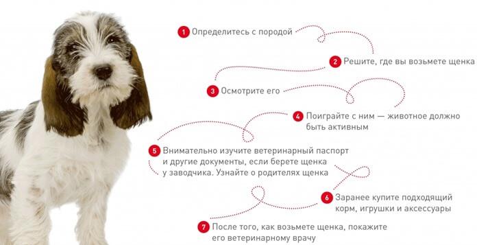 Как выбрать щенка сторожевой породы
