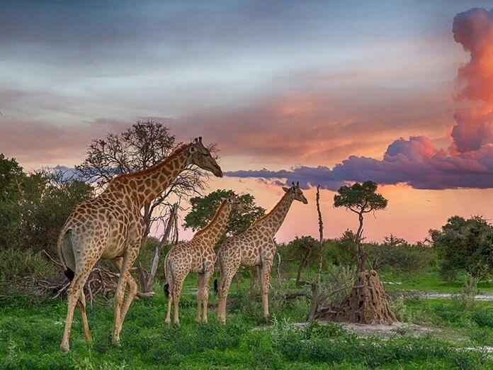 Ботсвана, путешествие в дикую природу